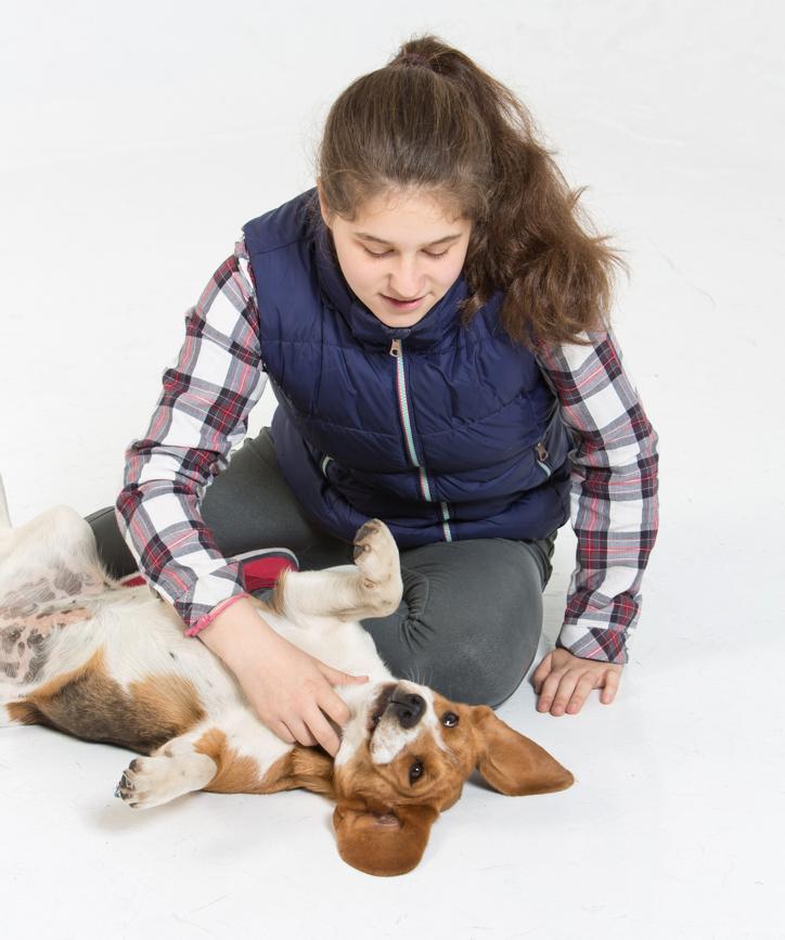 Fotografías de perros en estudio